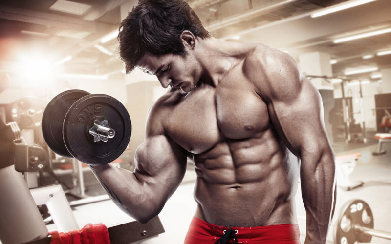 Increase muscle size and build mass